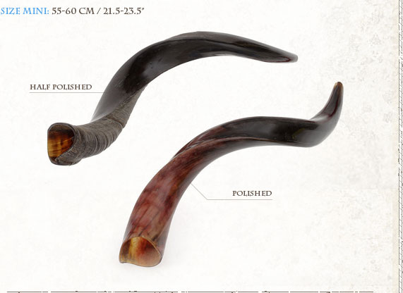 Yemenite Shofars (Kudo) Y Mini