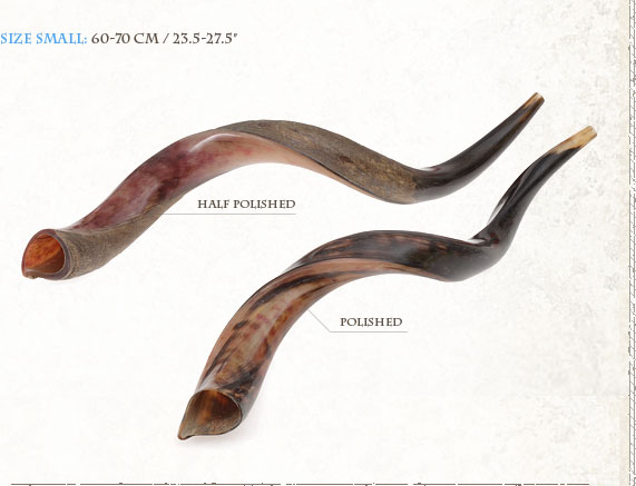 Yemenite Shofars (Kudo) Y Small